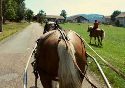 cheval-haut-doubs-randonnee-1