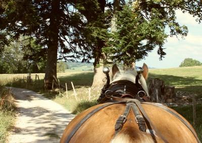 cheval-haut-doubs-randonnee-4
