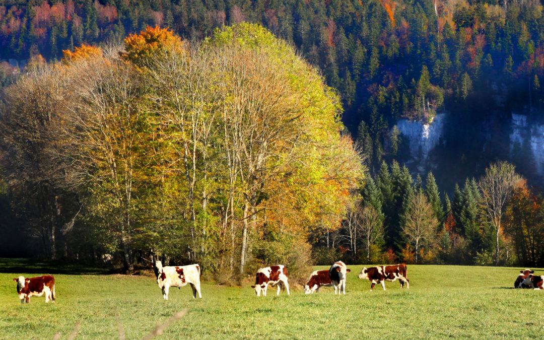 Le saut du Doubs en automne. Une très belle journée